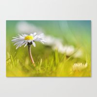 Absolutely Love...  Canvas Print