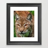 LYNX PORTRAIT Framed Art Print