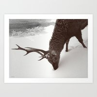 Tender Creature  Art Print