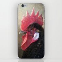 Black Rooster iPhone & iPod Skin