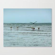 Water Fowl Canvas Print