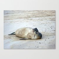 Hawaiian Seal Canvas Print