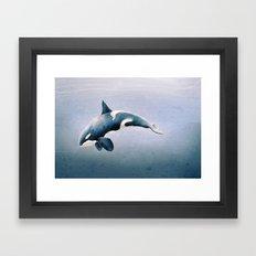 orcinus orca Framed Art Print