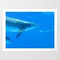 Dolphin II Art Print