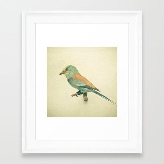 Bird Study #2 Framed Art Print