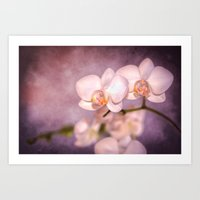 the white orchid - violet texture Art Print