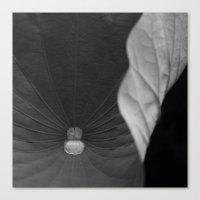 Curled leaf Canvas Print
