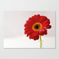 red gerbera Canvas Print
