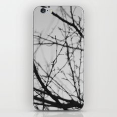 january tree iPhone & iPod Skin