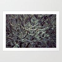 Green Lichen Art Print