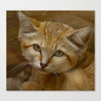 Sand Cat Canvas Print