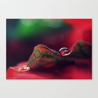 A Gift For The Season Canvas Print