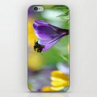 Bumble Bee on Crocus iPhone & iPod Skin