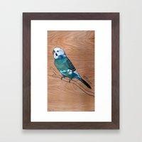 Budgerigar Framed Art Print