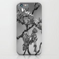 Jason's dogwood iPhone 6 Slim Case