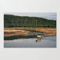 Bull Elk Crossing a River in Yellowstone Canvas Print