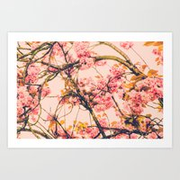 sweet sweet cherry blossoms Art Print
