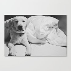 Sleepy Labrador Canvas Print