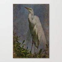 Giant Beauty Canvas Print