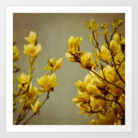 Magnolias Yellow Art Print
