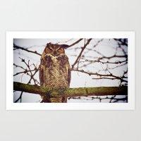 The Disgruntled Owl  (20… Art Print