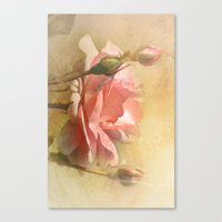 September Rose Canvas Print
