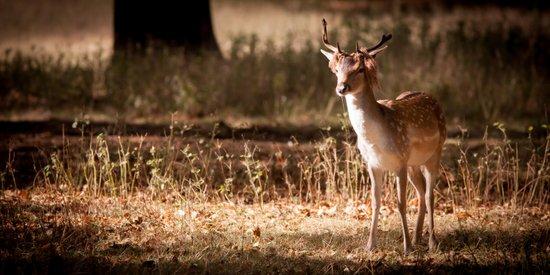 Deer in the Park Art Print