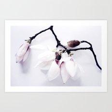 Magnolia Love Art Print