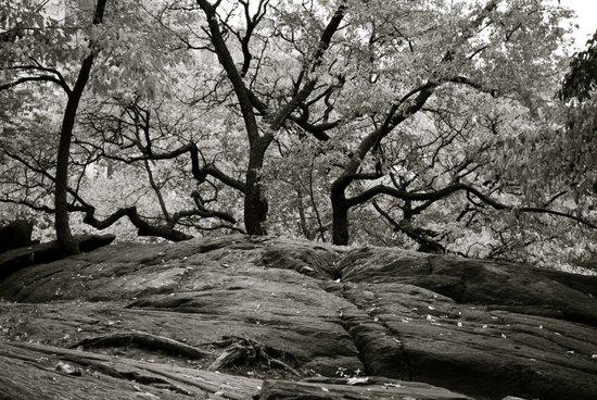 Rocks and trees Art Print