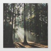 Sunbeam Woods Canvas Print