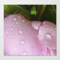 after rain Canvas Print