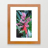 ,,, Framed Art Print