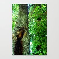 Canvas Print featuring treehole2 by Lindsey