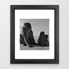 Gibraltar Monkey Framed Art Print