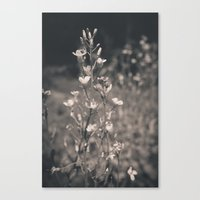 In Bloom Canvas Print