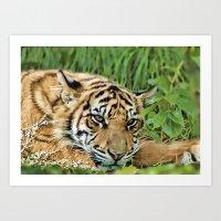 The Tiger!! Art Print