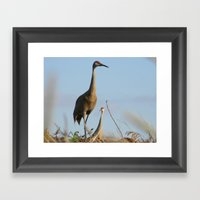 Cranes on the Lookout Framed Art Print