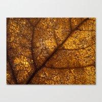 illuminated leaf Canvas Print