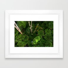 Forty metres above the forest Floor Framed Art Print