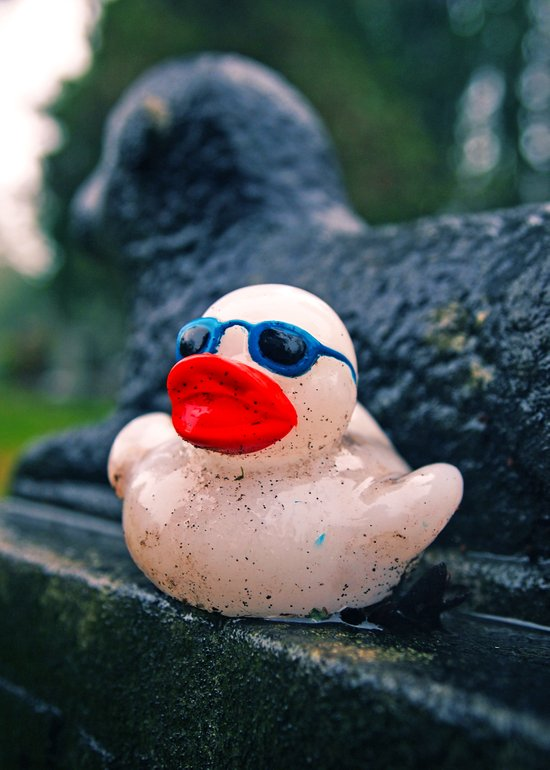 Graveyard duck Canvas Print