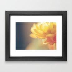 Chinese Rose Framed Art Print