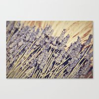 Lavender Flowers Canvas Print