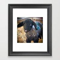 Little Lamb. Framed Art Print