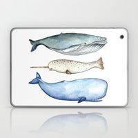 S'whale Laptop & iPad Skin