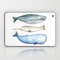 S'whale Laptop & iPad Skin