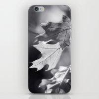 Winter Oak In Black And … iPhone & iPod Skin