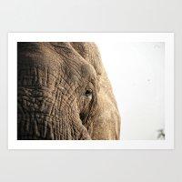 Elephant, Into The Wild.… Art Print
