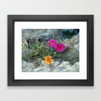 Rock Rose Framed Art Print