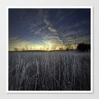 At Dawn In The Grass Canvas Print