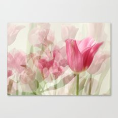 Tulipes Canvas Print